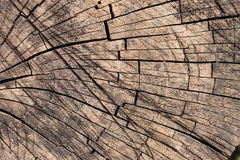 Background of the Old Tree Bark Royalty Free Stock Photos