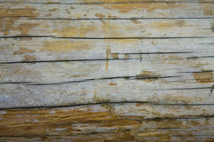 Background of old tree bark dark. Wooden texture saw cut with cracks and holes stock photo