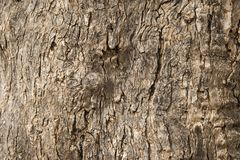 Old tree bark texture. The background of old tree bark Stock Photos