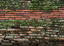 Background of old vintage brick wall. With moss royalty free stock photos