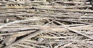 The background of old wood and straw. Texture background of gray. Wood and dry twigr royalty free stock photos
