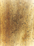 Background old wood wormy. Antique white threads holes brown beige building background Stock Images