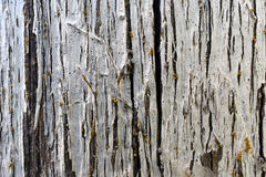 Background of old wooden board Royalty Free Stock Photo