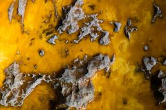 Background of Old and Yellow Amber. Amber is fossilized tree resin, which has been appreciated for its color and natural beauty since Neolithic times stock image