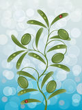 Background with a olive branch Stock Photo