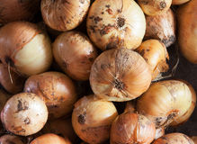 Background from a onion Royalty Free Stock Photo
