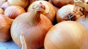 Background of onion royalty free stock photos