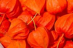 Background orange background ripe physalis.  Red Royalty Free Stock Image