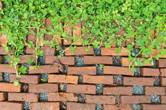 Background of orange bricks on floor covered by green leaves Royalty Free Stock Image
