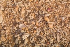 Background orange, brown, coral Shell in Asia Phuket Thailand Royalty Free Stock Photo