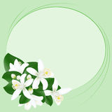 Background with orange flowers. Green background with orange flowers Royalty Free Stock Photo