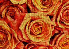 Background with orange roses Royalty Free Stock Images
