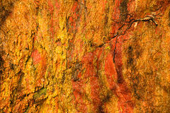 Background of orange wet stone rock wall texture outdoor Stock Photos