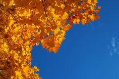 Background from orange and yellow autumn maple leaves and the blue bright sky. Background from orange and yellow autumn maple leaves and the blue sky stock photo