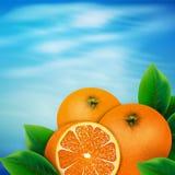 Background of oranges Royalty Free Stock Image