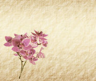 Background with a orchid. Vintage wallpaper background with a orchid Stock Image