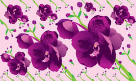 Background Orchid Stock Photo