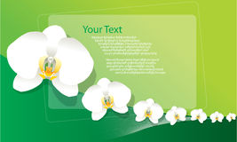 Background Orchid Royalty Free Stock Images