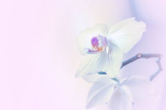 Background with orchid flowers. Lilac background with orchid flowers Stock Photo