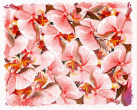 Background of orchid. Background or texture of colored orchid Stock Images