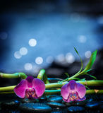 Background with orchids stone and bamboo - sea. Composition with orchids for bath royalty free stock photos