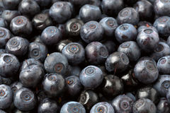 Background organic blueberries Stock Photos