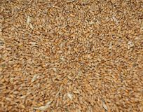 Background of organic grains. Scattered on the surface Royalty Free Stock Image