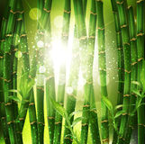 Background with oriental bamboo. Vector background with oriental bamboo grove, and sunlight Royalty Free Stock Photography
