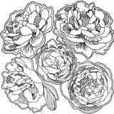 Background ornament print of blooming peonies Royalty Free Stock Image