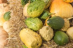 Background from ornamental gourds on a hay bale royalty free stock image
