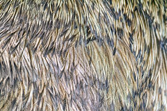 Background of ostrich feathers Stock Photo