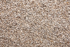Background out of peeled sunflower seeds Royalty Free Stock Images