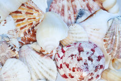 Background of Overlapping Colorful Seashells Stock Photography