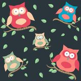 Background with owls  on brunches Royalty Free Stock Image