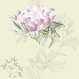 Background with Paeonia flowers Stock Images