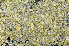 Background of painted yellow wood chips on the soil. In the garden Stock Photos