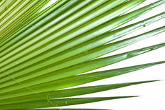Background with palm Stock Photo