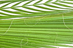 Background with palm Royalty Free Stock Image