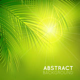 Background with palm branches Stock Photo