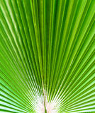 The background of palm leaf Stock Images