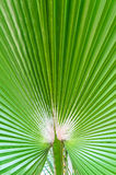 The background of palm leaf Stock Photos