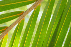 Background of palm leaves Stock Image