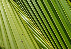 Background of palm leaves Stock Photography