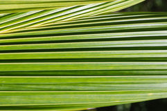 Background of palm leaves Royalty Free Stock Photo