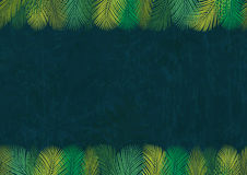 Background 1 Of Palm Leaves Stock Photo