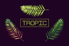 Background with palm leaves and the word `tropic`. Lettering. Tropics. Border. Exotics. Stock Photos