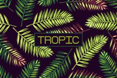 Background with palm leaves and the word `tropic`. Lettering Tropics Border Exotics. Royalty Free Stock Images