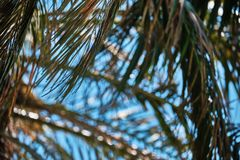 Background with palm tree leaves stock images