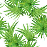 Background palm tree leaves. Seamless pattern. Watercolor illust Stock Image
