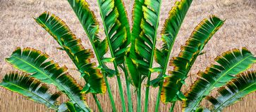 Background of a palm tree Stock Images